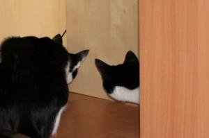 Cimba (rechts) und Camba (links) bei der Mäusejagd im Wohnzimmer