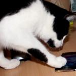Cimba und der iPod